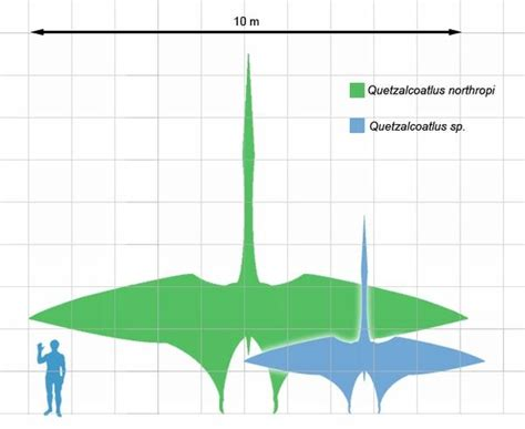 Giant Pterosaur could fly thousands of miles   Urban Ghosts