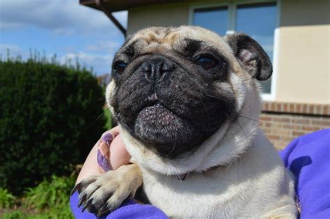 Search For Woman That Dropped Pug Off at Ontario County